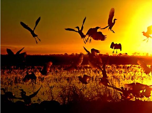 yolo-basin-wild-life